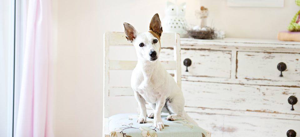 Dog Society Press